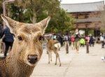 奈良のソープを徹底調査!周辺地域のおすすめ風俗情報も【ソープランド】